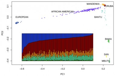 Credit: Characterizing the admixed African ancestry of African Americans