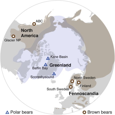 "Liu, Shiping, et al. ""Population Genomics Reveal Recent Speciation and Rapid Evolutionary Adaptation in Polar Bears."" Cell 157.4 (2014): 785-794."