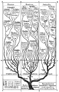 "Haeckel's ""tree of life"""