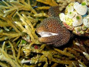 Beware the moray in the reef!