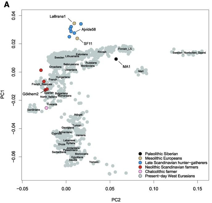 "Citation: Skoglund, Pontus, et al. ""Genomic Diversity and Admixture Differs for Stone-Age Scandinavian Foragers and Farmers."" Science 344.6185 (2014): 747-750."