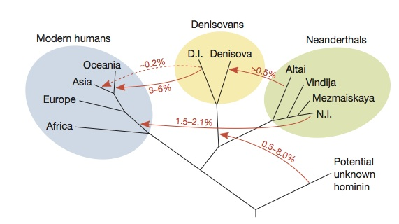 "Citation: Prüfer, Kay, et al. ""The complete genome sequence of a Neanderthal from the Altai Mountains."" Nature 505.7481 (2014): 43-49."
