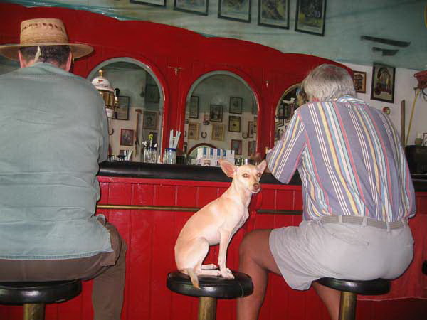 Not a posed photo. Many bars don't mind if a customer brings along the pooch to curl up under a table or, well, see above. Some Americans–again, for whatever reason, almost always the women–get into an uproar over it. Why, it's awful, what kind of country allows, why we would never do such a thing in Purdue.